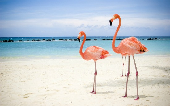 Ροζ φλαμίνγκο παντού κι εδώ πουθενά